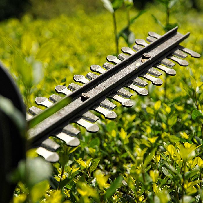 Taille de réduction, débroussaillage haies et arbustes à Soignies