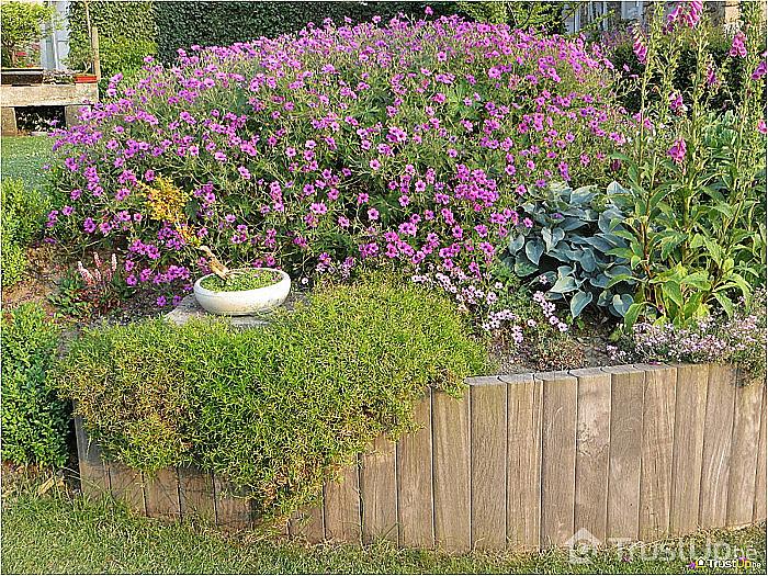 Plantation de fleurs, arbustes, arbres